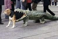 alligators | Kimberly Townsend Palmer