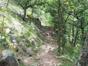 a path through the woods with trees on each side and rocks off to the left