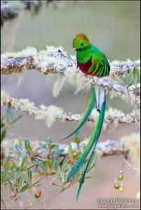 Quetzal by Judd Patterson