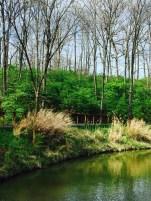 park grasses trees