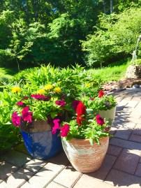 flowers asst pots