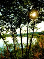 lakesunrisethroughtrees