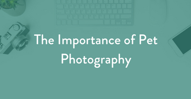 The Importance of Pet Photography