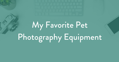 My Favorite Pet Photography Equipment