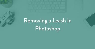 pet photography tutorial, photoshop tutorial, leash removal, pet photography, dog photography, learn pet photography