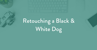 Retouching a black and white dog