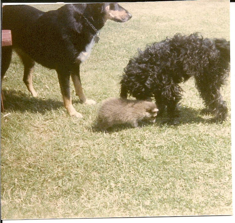 Roxanne with Brandy and Mindy