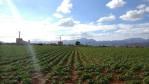 De windmolens