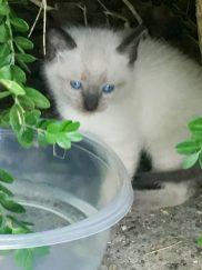 kitties-1809