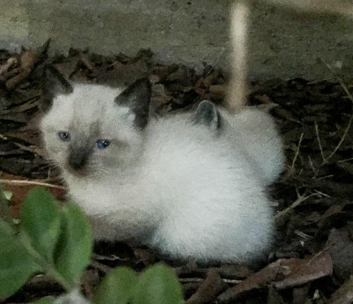 kitties-1816