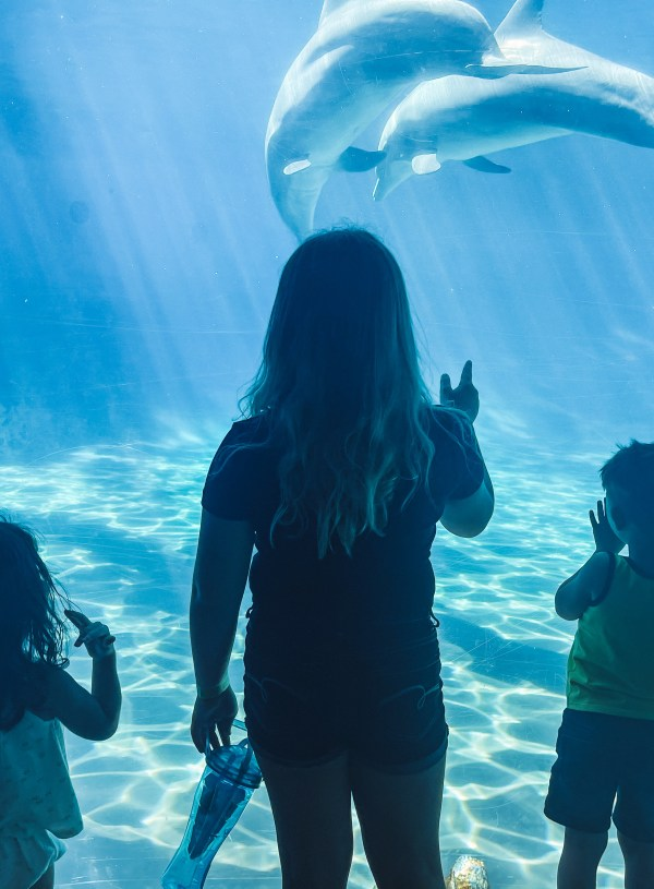 Top 4 Spots To Visit In Orlando With Kids