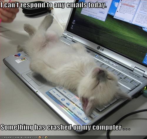 funny-pictures-kitten-crashed-laptop.jpg