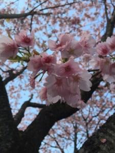 image-20-03-16-09-03-5