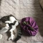 猫と一緒に風呂敷でバッグを作る 結ぶだけ20秒