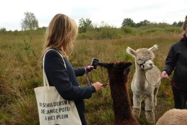 Selfie met je alpaca