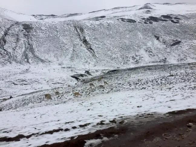Sneeuw op de bergen
