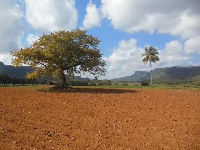Mooie kleuren: de rode aarde, de felblauwe lucht en het groen van de boom. Genieten!