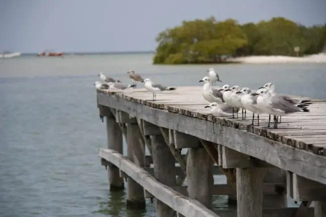 Meeuwen bij Punta Cocos