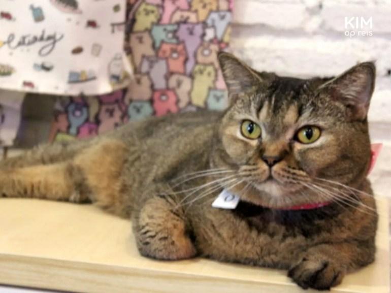 Kat in het Caturday Cafe