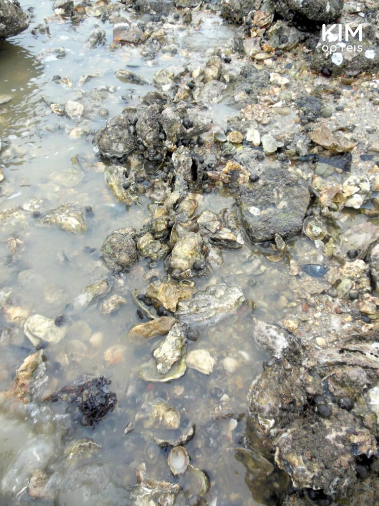 The oysters are up for grabs in Zeeland