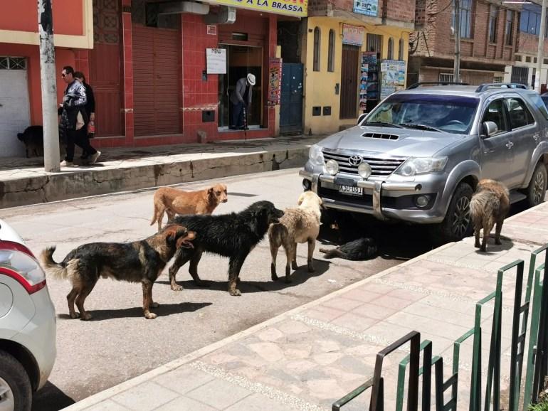 Straathonden in Puno