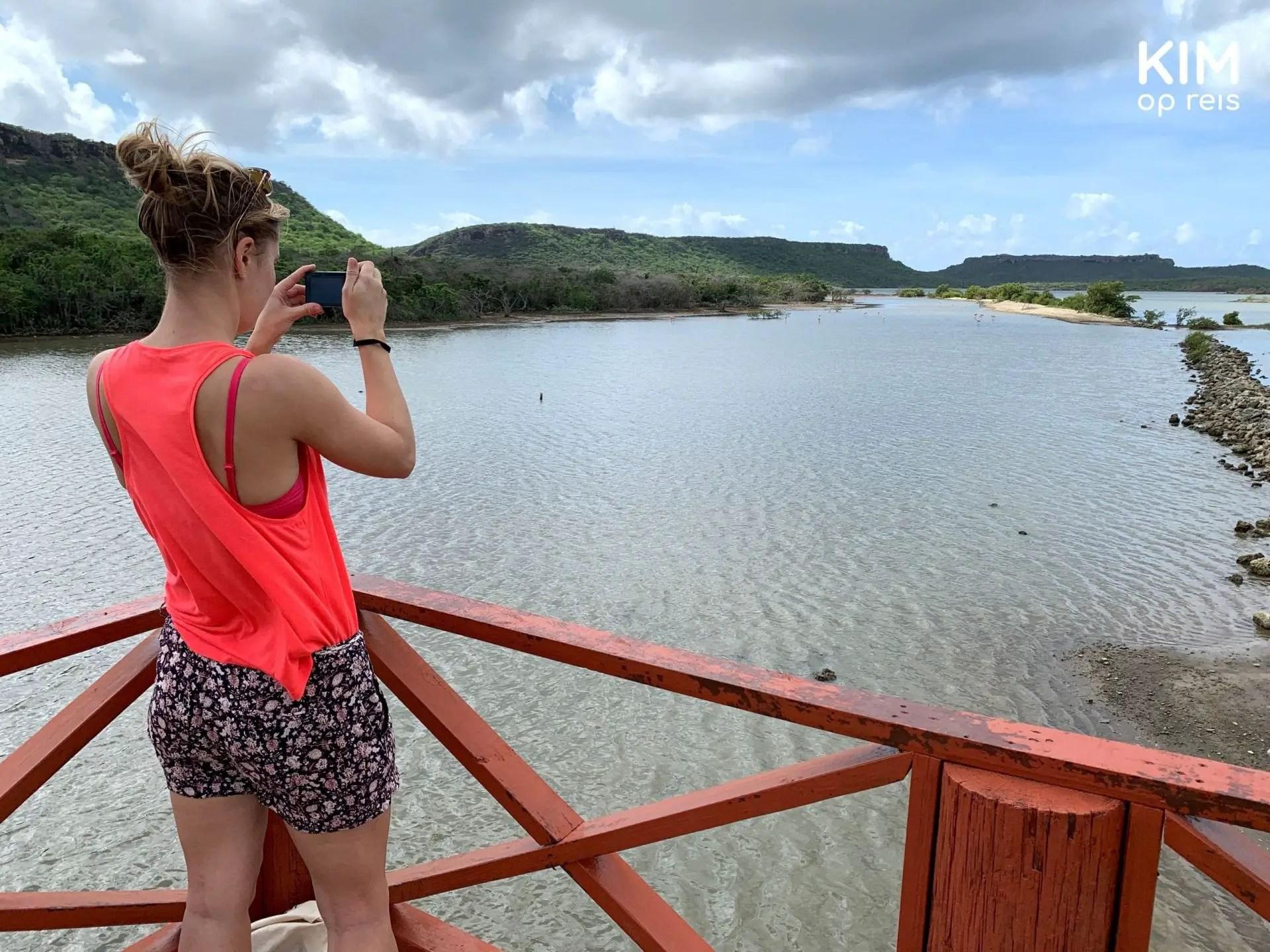 Flamingo's spotten Curaçao: foto's maken vanaf de uitkijktoren