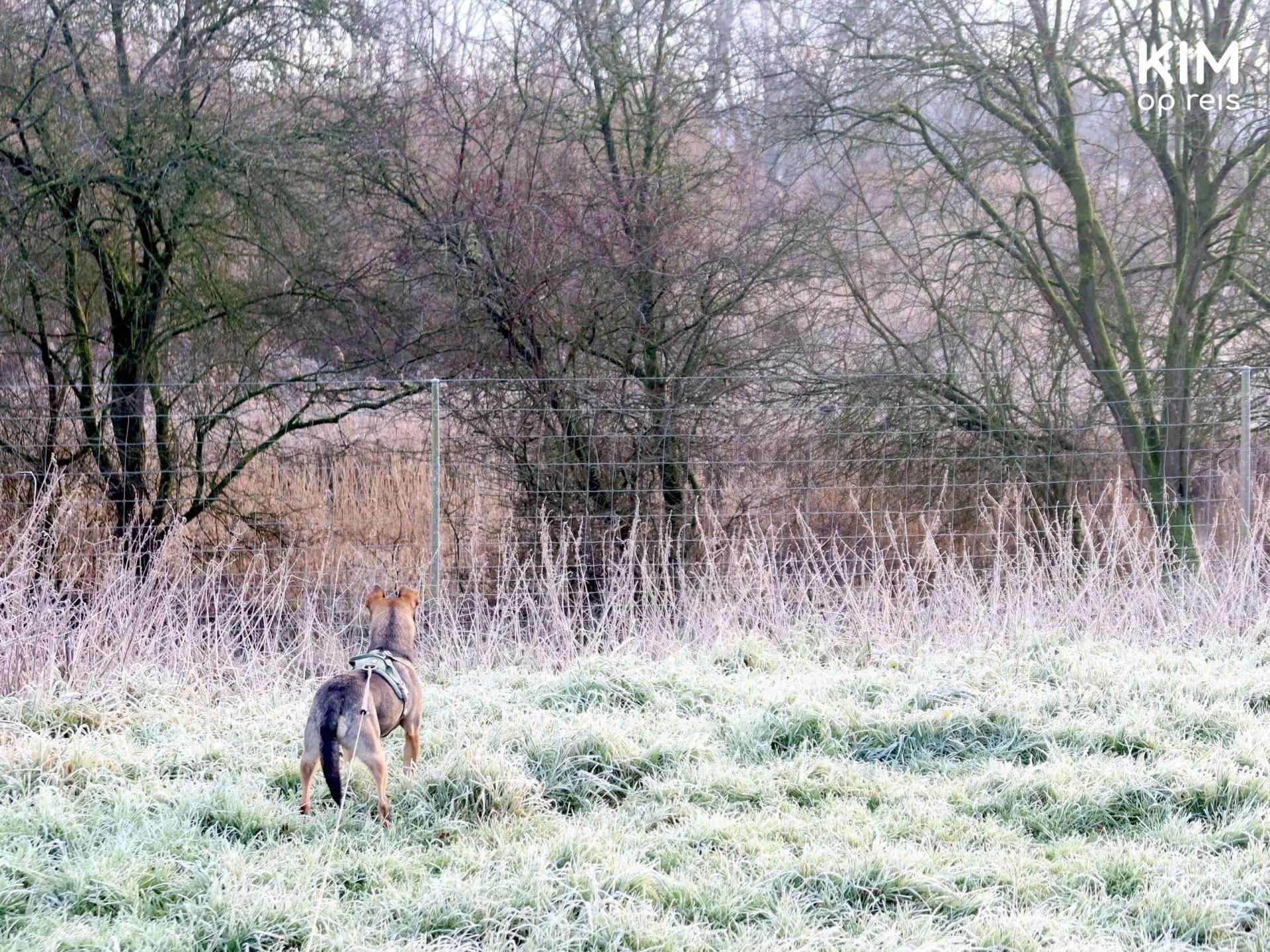 Natuurpark Lelystad wandelen met de hond: hond speurt de omgeving af