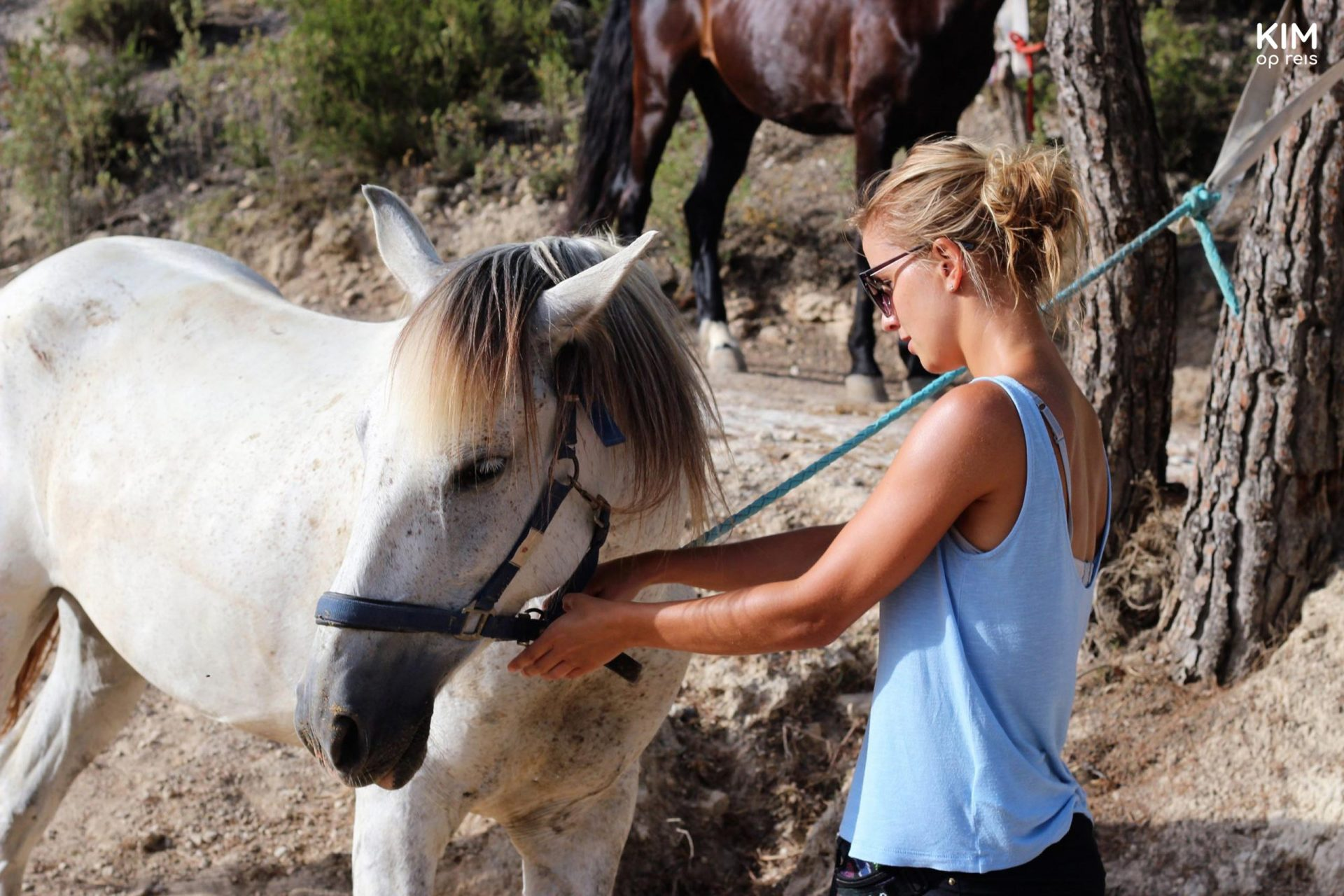 Putting on the halter on the horses - Kim puts on a halter on a white horse