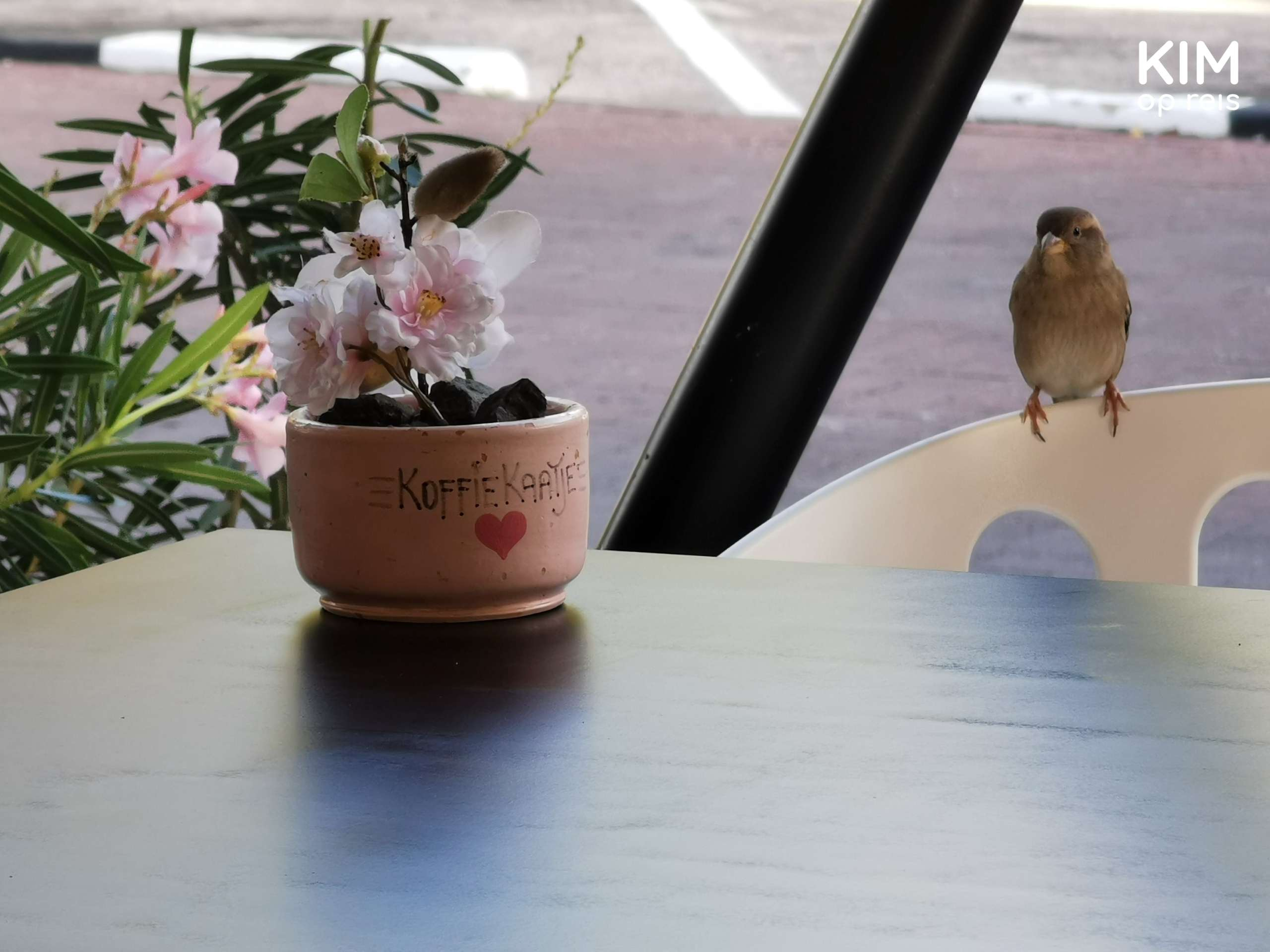 Koffie Kaatje Curaçao: small plant on a table with 'Koffie Kaatje' on the flower pot and a sparrow in the background