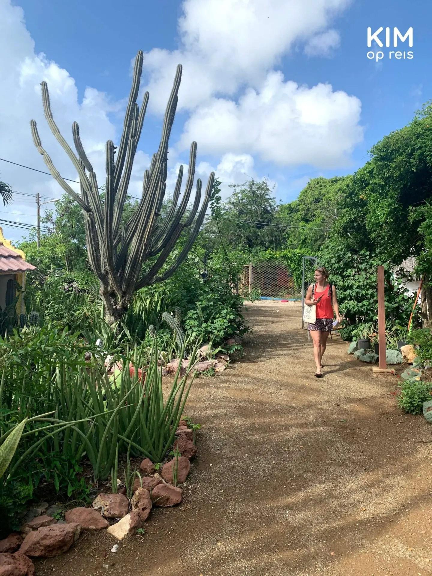 Kruidentuin Den Paradera Curaçao: vrouw wandelt langs een grote cactus