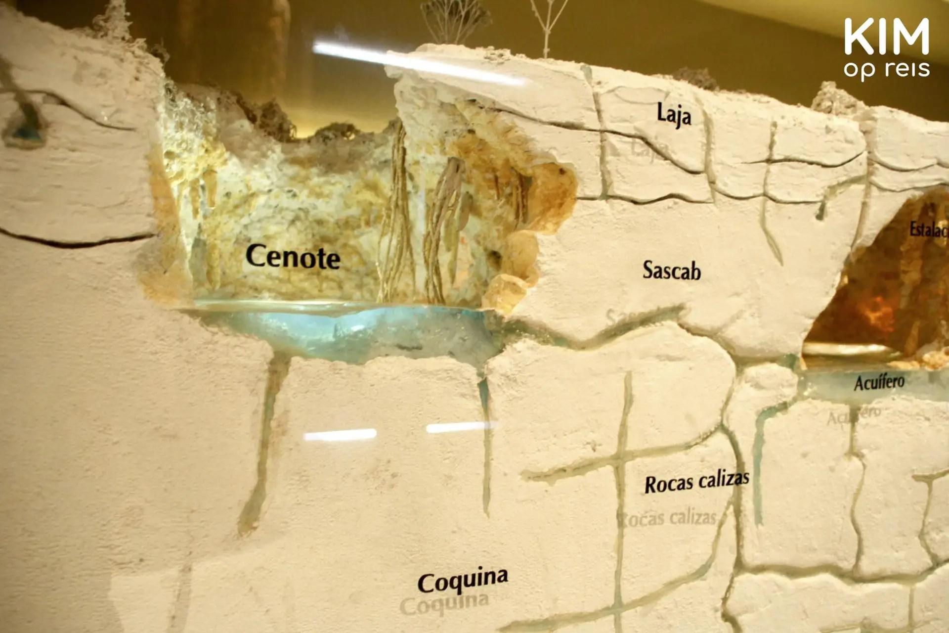 Leren over cenotes in het museum: doorsnede van een cenote zodat je alle aardlagen kunt zien