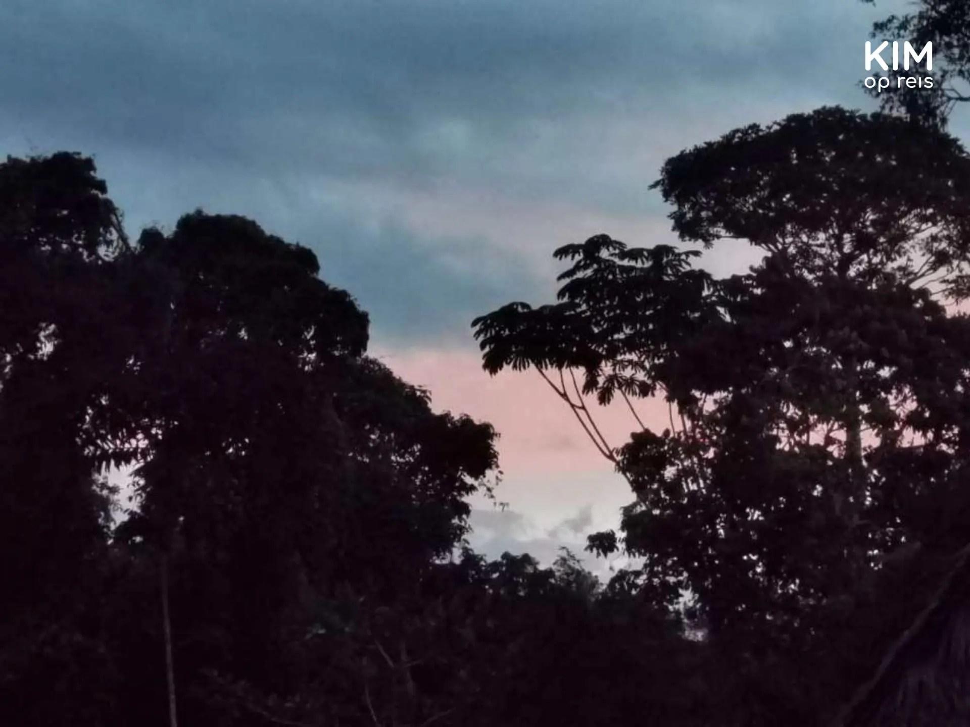Gestrand in Peru Jungle Book bomen