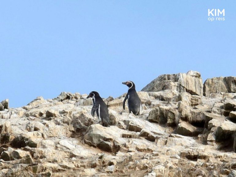 Pinguins Islas Ballestas Paracas