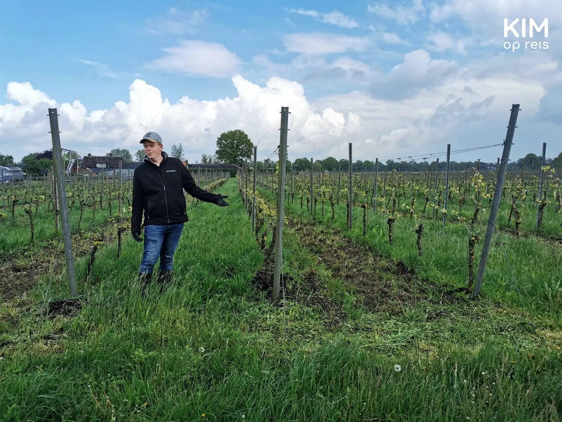 Rondleiding wijngaard Wierden De Wijnmakers: uitleg bij de wijnraken door één van de wijnmakers