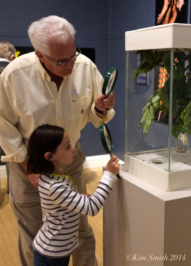Butterflies Berkshire Museum ©Kim Smith 2014  copy