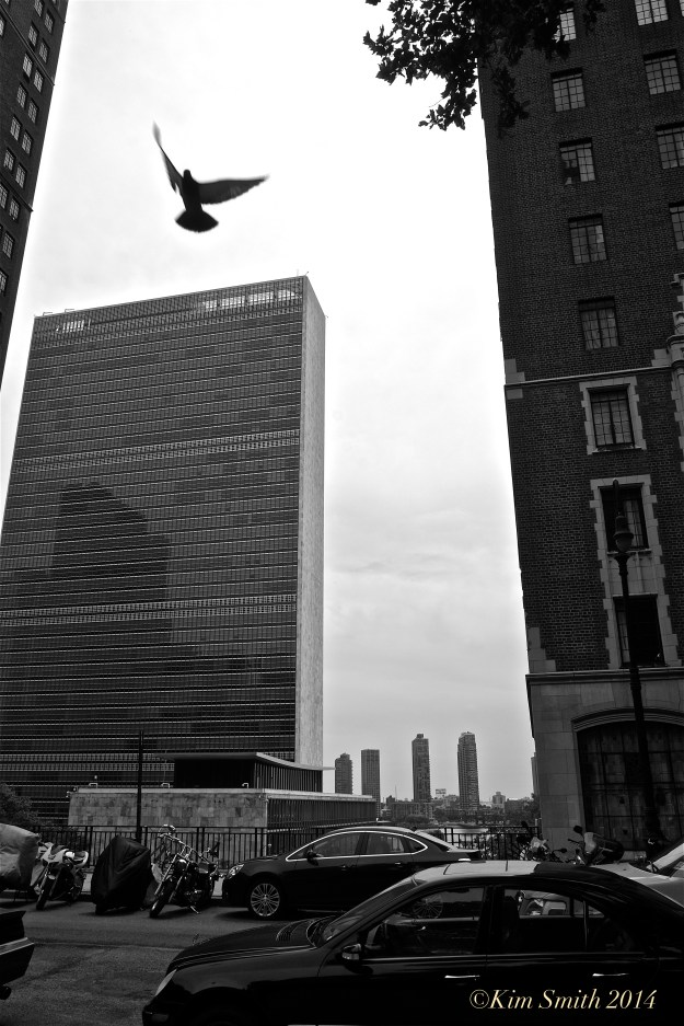 UN Headquarters Dove of Peace ©Kim Smith 2014