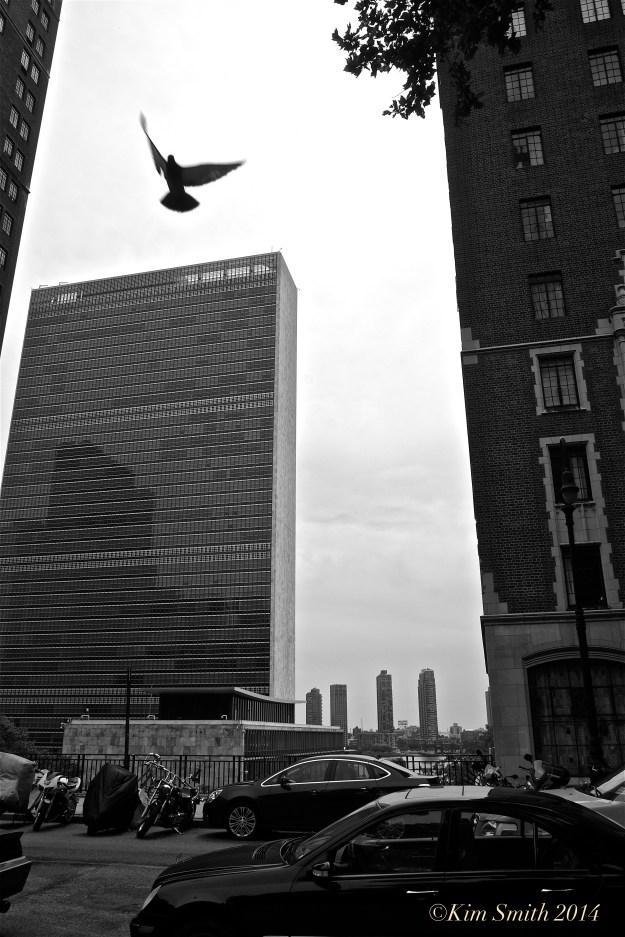 UN Headquarters Dove of Peace ©Kim Smith 2014