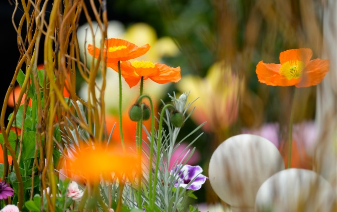 Poppies Mary Prentiss inn Cambridge MA copyright Kim Smith