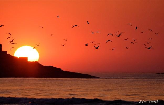 Good Harbor Beach Sunrise Gloucester seagulls copyright Kim Smith