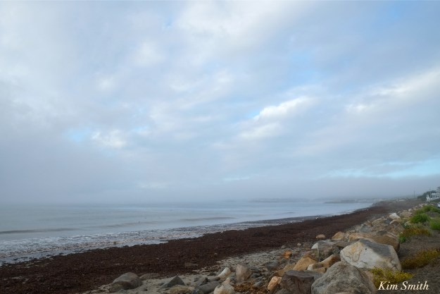 pebble-beach-seaweed-foogy-morning-copyright-kim-smith
