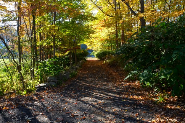 fall-foliage-lobster-cove-copyright-kim-smith