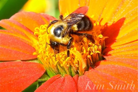 mary-prentiss-inn-urban-pollinator-garden-cambridge-ma-22-copyright-kim-smith