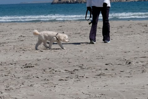 Dog Disturbance Good Harbor Beach Gloucester 4-6-19 c Kim Smith - 15