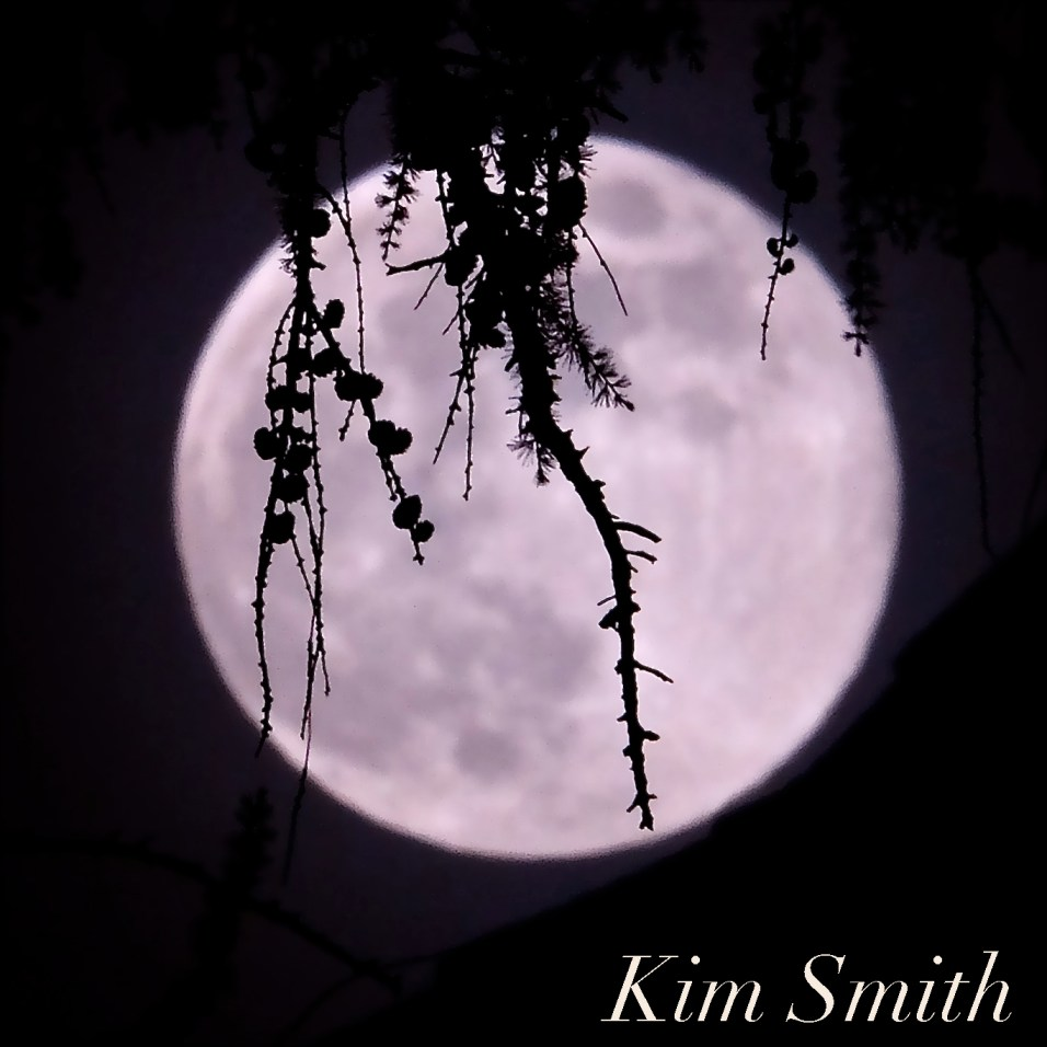 Full Flower Moon May Gloucester Massachusetts -22 copyright Kim Smith