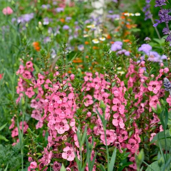Urban Pollinator Garden Mary Prentiss Inn Cambridge copyright Kim Smith - 05