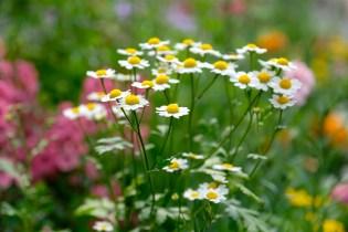 Urban Pollinator Garden Mary Prentiss Inn Cambridge copyright Kim Smith - 06