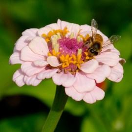 Urban Pollinator Garden Mary Prentiss Inn Cambridge copyright Kim Smith - 16