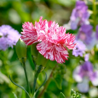 Urban Pollinator Garden Mary Prentiss Inn Cambridge copyright Kim Smith - 23