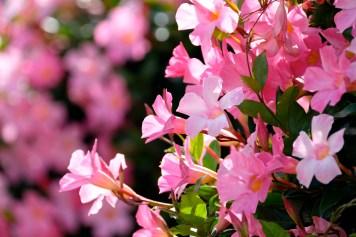 Urban Pollinator Garden Mary Prentiss Inn Cambridge copyright Kim Smith - 67