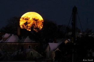 Blue Moon Halloween October 31, 2020 Gloucester copyright Kim Smith - 5 of 8